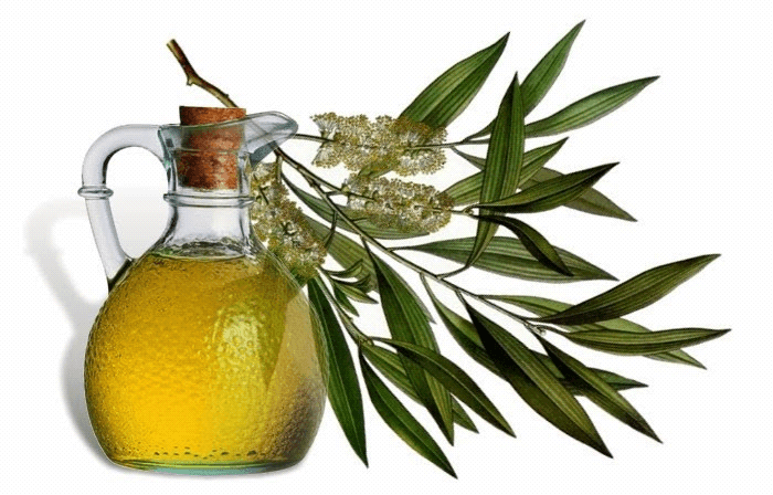 Tea tree oil for treating Dandruff
