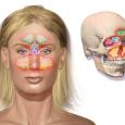 how-to-get-rid-of-a-sinus-headache