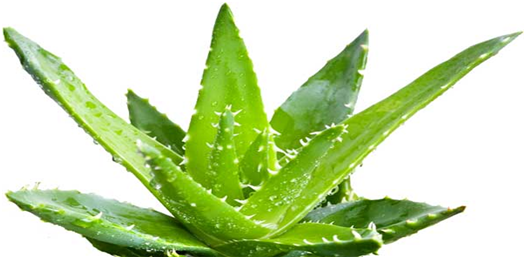 HOW TO LIGHTEN TANNED SKIN NATURALLY with aloe vera