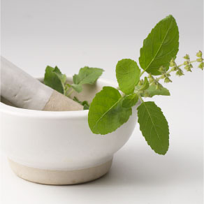 how to get rid of mouth ulcers with Tulsi Leaves